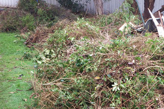 Green waste removal service in Sydney